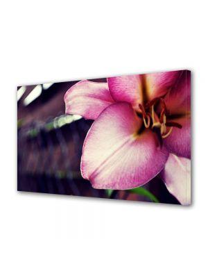 Tablou Canvas Flori Floare speciala