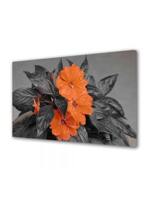 Tablou Canvas Flori Flori cu nuante portocalii