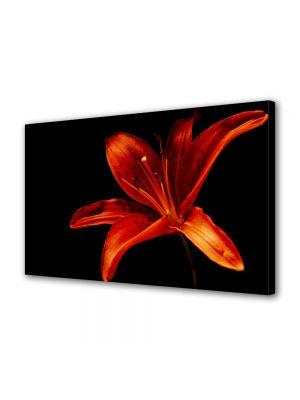 Tablou Canvas Flori Floare pe fundal negru