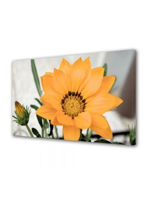 Tablou Canvas Flori Floare inflorita