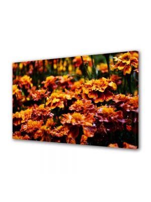 Tablou Canvas Flori Flori de gradina
