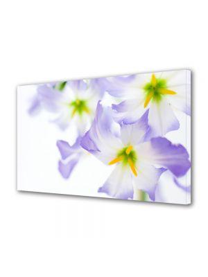 Tablou Canvas Flori Lumina puternica