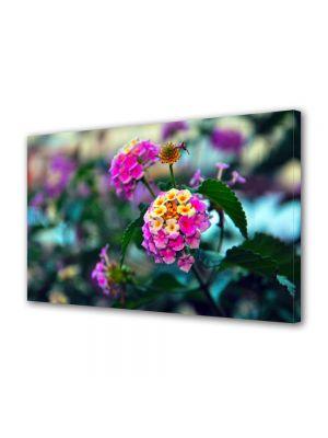 Tablou Canvas Flori Flori in gradina