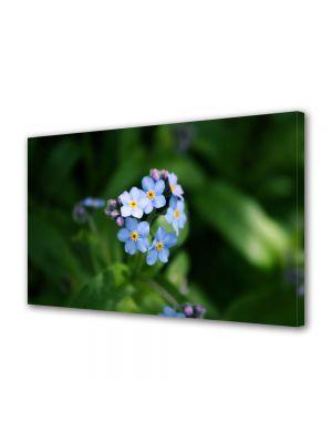 Tablou Canvas Flori Floare Nu ma uita