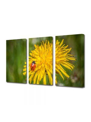 Set Tablouri Multicanvas 3 Piese Flori Buburuza pe floare de papadie