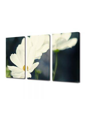 Set Tablouri Multicanvas 3 Piese Flori Flori albicioase