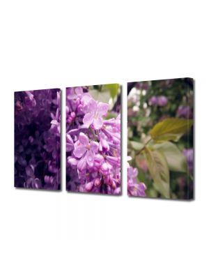 Set Tablouri Multicanvas 3 Piese Flori Liliac