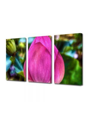 Set Tablouri Multicanvas 3 Piese Flori Floare de Lotus