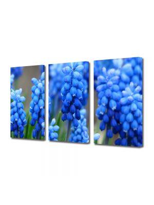 Set Tablouri Multicanvas 3 Piese Flori Flori albastre Muscari