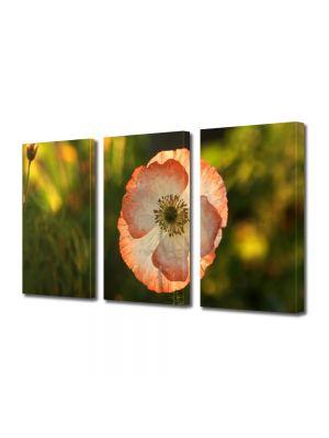 Set Tablouri Multicanvas 3 Piese Flori Floare de mac inflorita