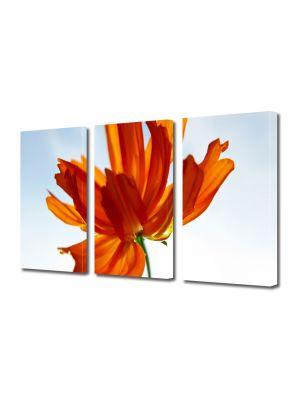 Set Tablouri Multicanvas 3 Piese Flori Floare in lumina soarelui