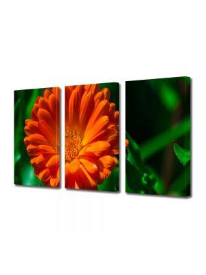 Set Tablouri Multicanvas 3 Piese Flori Portocaliu si verde