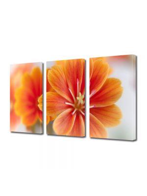 Set Tablouri Multicanvas 3 Piese Flori Floare Lewisia