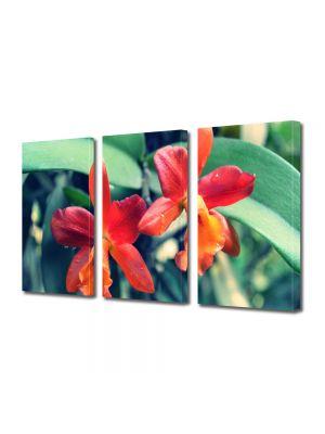 Set Tablouri Multicanvas 3 Piese Flori Orhidee portocalii