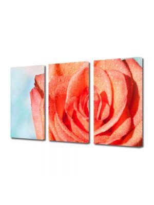 Set Tablouri Multicanvas 3 Piese Flori Trandafir portocaliu