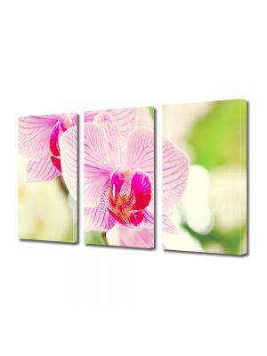 Set Tablouri Multicanvas 3 Piese Flori Orhidee luminoasa