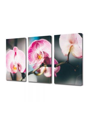 Set Tablouri Multicanvas 3 Piese Flori Orhidee inflorite