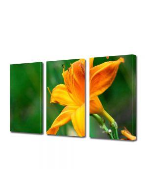Set Tablouri Multicanvas 3 Piese Flori Fir de liliac portocaliu