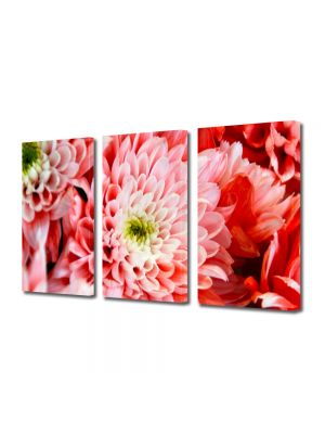 Set Tablouri Multicanvas 3 Piese Flori Crizantema roz