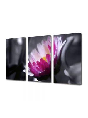 Set Tablouri Multicanvas 3 Piese Flori Floare roz pe fundal negru
