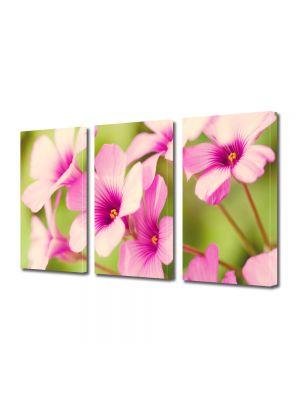 Set Tablouri Multicanvas 3 Piese Flori Petale de flori roz
