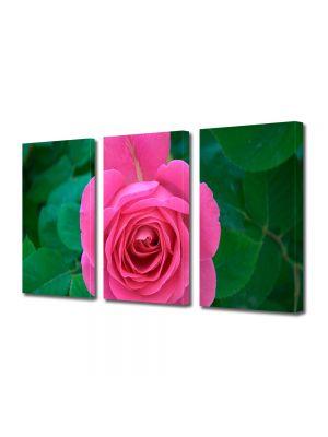 Set Tablouri Multicanvas 3 Piese Flori Trandafir rozaliu