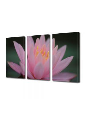 Set Tablouri Multicanvas 3 Piese Flori Liliac de apa roz