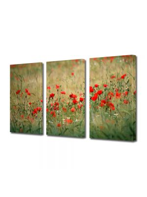 Set Tablouri Multicanvas 3 Piese Flori Camp cu maci