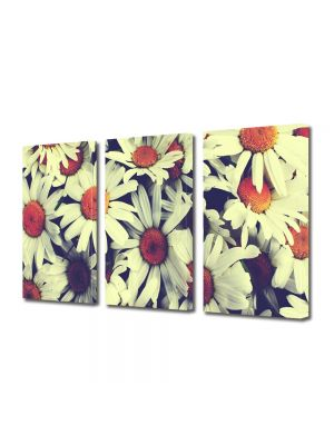 Set Tablouri Multicanvas 3 Piese Flori Flori de musetel