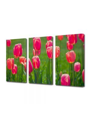 Set Tablouri Multicanvas 3 Piese Flori Lalele de camp