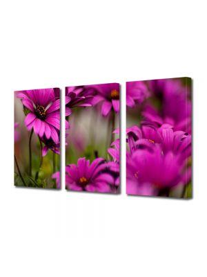 Set Tablouri Multicanvas 3 Piese Flori Margarete roz