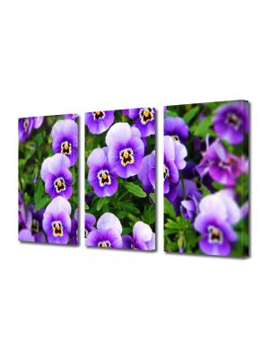 Set Tablouri Multicanvas 3 Piese Flori Panselute Violet