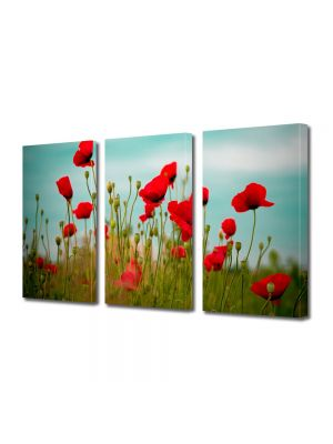 Set Tablouri Multicanvas 3 Piese Flori Maci rosii