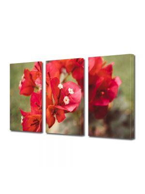 Set Tablouri Multicanvas 3 Piese Flori Flori rare