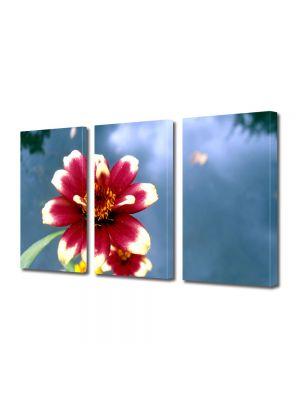 Set Tablouri Multicanvas 3 Piese Flori Floare cu petale rosii si albe