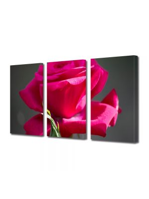 Set Tablouri Multicanvas 3 Piese Flori Trandafir rosu gingas