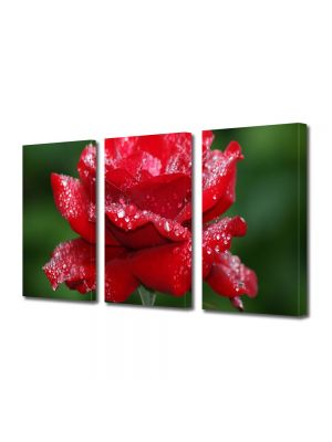 Set Tablouri Multicanvas 3 Piese Flori Fir de trandafir plouat