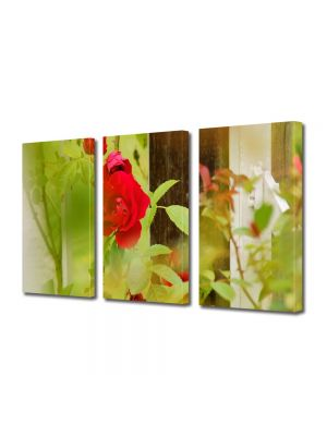 Set Tablouri Multicanvas 3 Piese Flori Trandafiri la fereastra