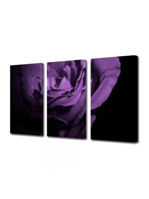 Set Tablouri Multicanvas 3 Piese Flori Trandafir violet