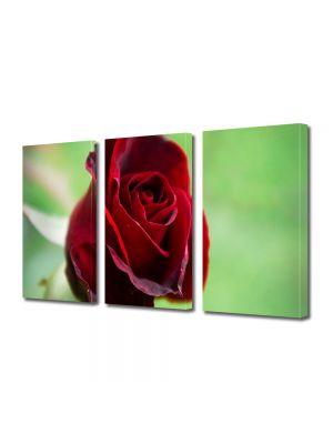 Set Tablouri Multicanvas 3 Piese Flori Fir rosu de trandafir