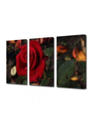 Set Tablouri Multicanvas 3 Piese Flori Floarea iubirii
