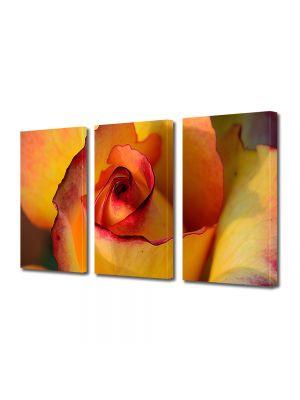 Set Tablouri Multicanvas 3 Piese Flori Trandafir galben