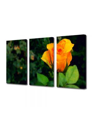 Set Tablouri Multicanvas 3 Piese Flori Mugure de trandafir galben