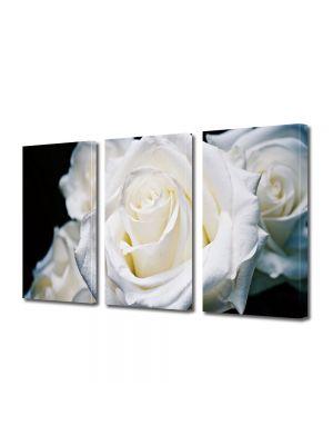 Set Tablouri Multicanvas 3 Piese Flori Trandafiri albi 30 x 60 cm