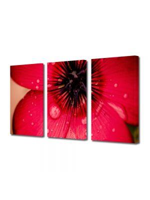 Set Tablouri Multicanvas 3 Piese Flori Floare caramizie