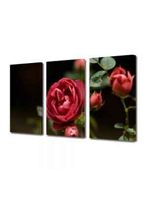 Set Tablouri Multicanvas 3 Piese Flori Muguri de trandafir