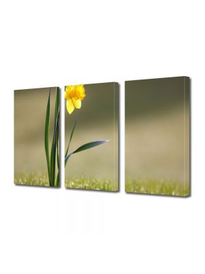 Set Tablouri Multicanvas 3 Piese Flori Narcisa singuratica