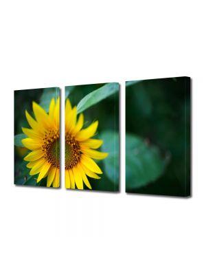 Set Tablouri Multicanvas 3 Piese Flori Pui de floricica soarelui