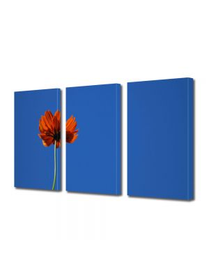Set Tablouri Multicanvas 3 Piese Flori Mac puternic