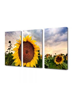 Set Tablouri Multicanvas 3 Piese Flori Camp de floarea soarelui
